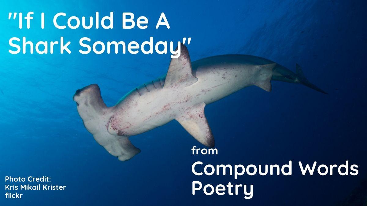 Image of a hammerhead shark