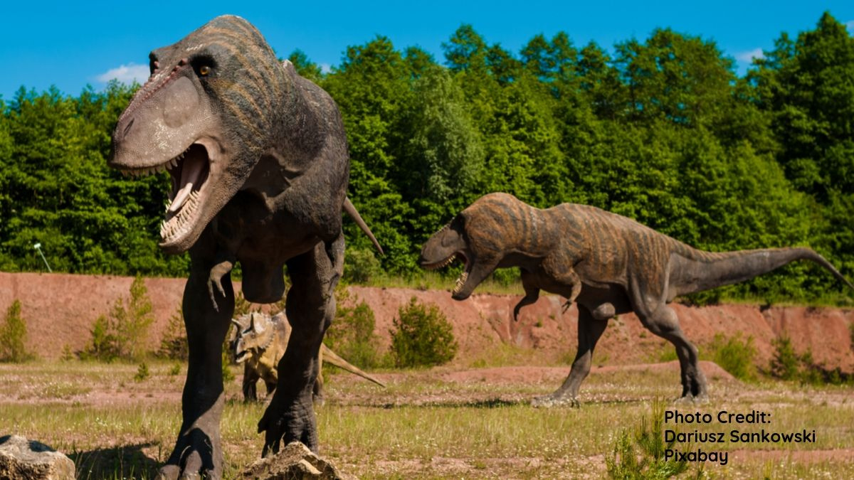 Image of T-Rex dinosaurs