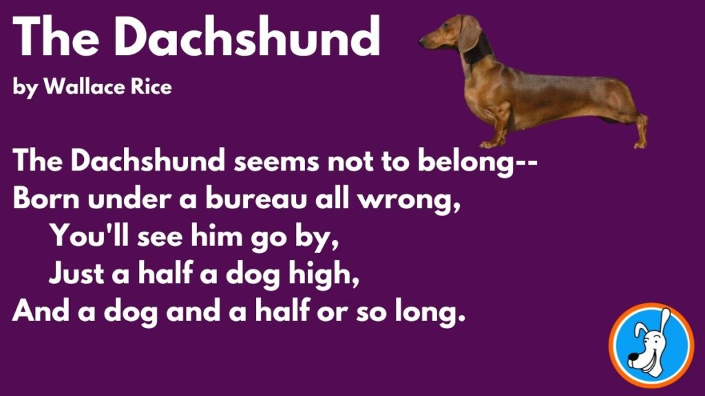 Limerick The Dachshund by Wallace Rice